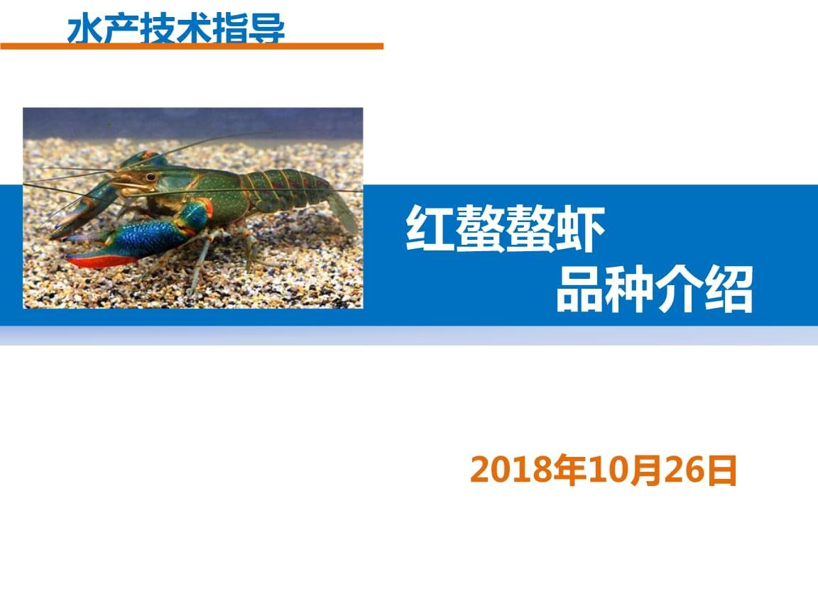 红螯螯虾养殖技术.pptx