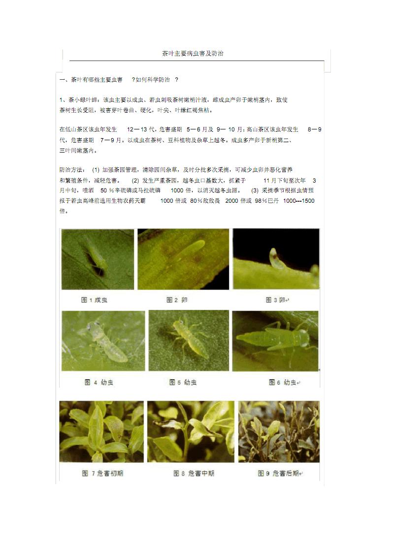 茶园主要病虫害及其防治(有配图).pdf