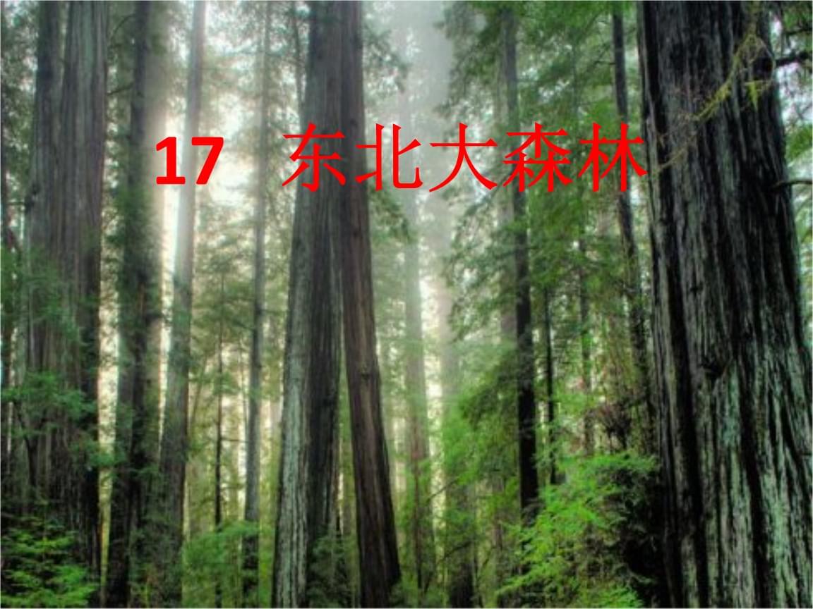 四年级下册语文东北大森林 冀教版 (6).ppt