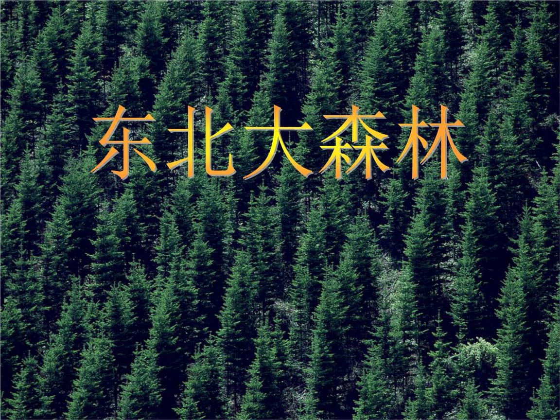 四年级下册语文东北大森林 冀教版 (3).ppt