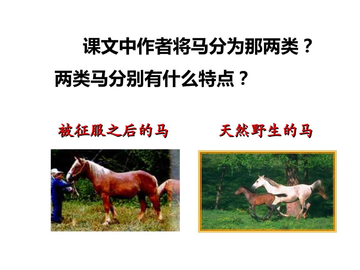 《马》课文内容理解1.ppt