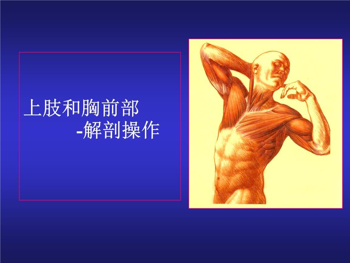 局部解剖学课件-上肢操作(完整版).ppt