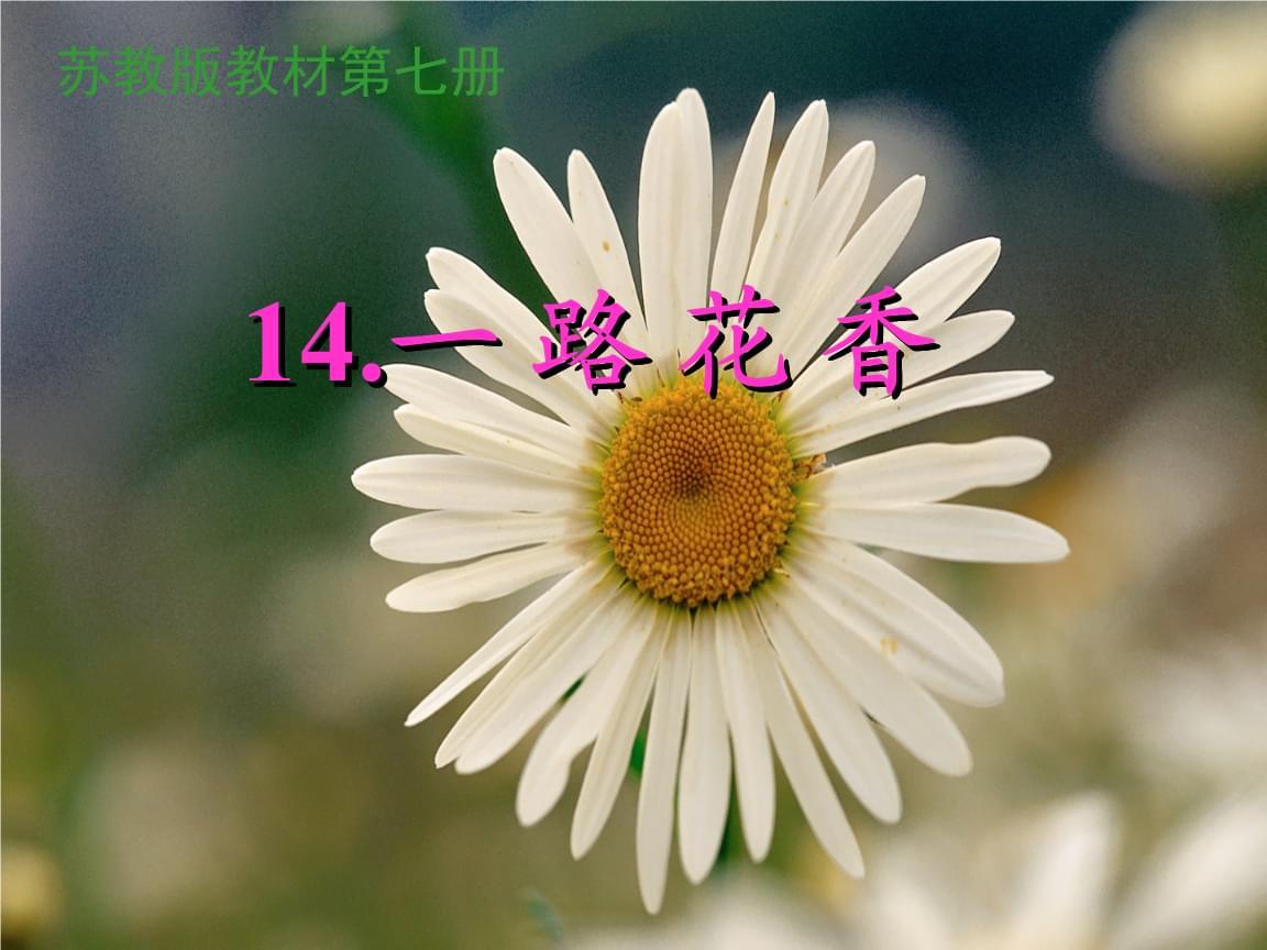 四年级上册语文一路花香苏教版 (4).ppt