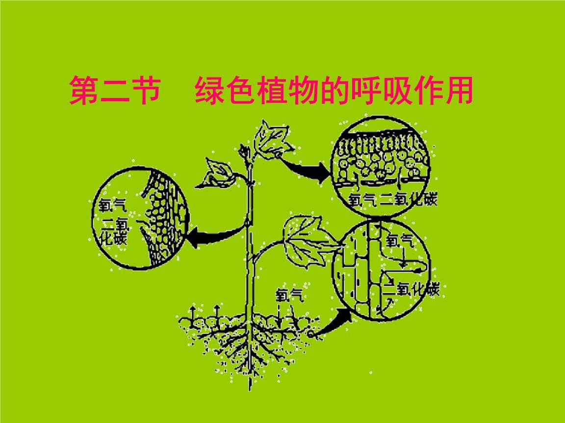人教版七年级上册生物绿色植物的呼吸作用 (2).ppt