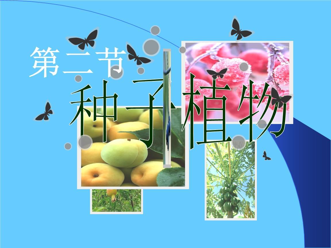 人教版七年级上册生物种子植物 (2).ppt