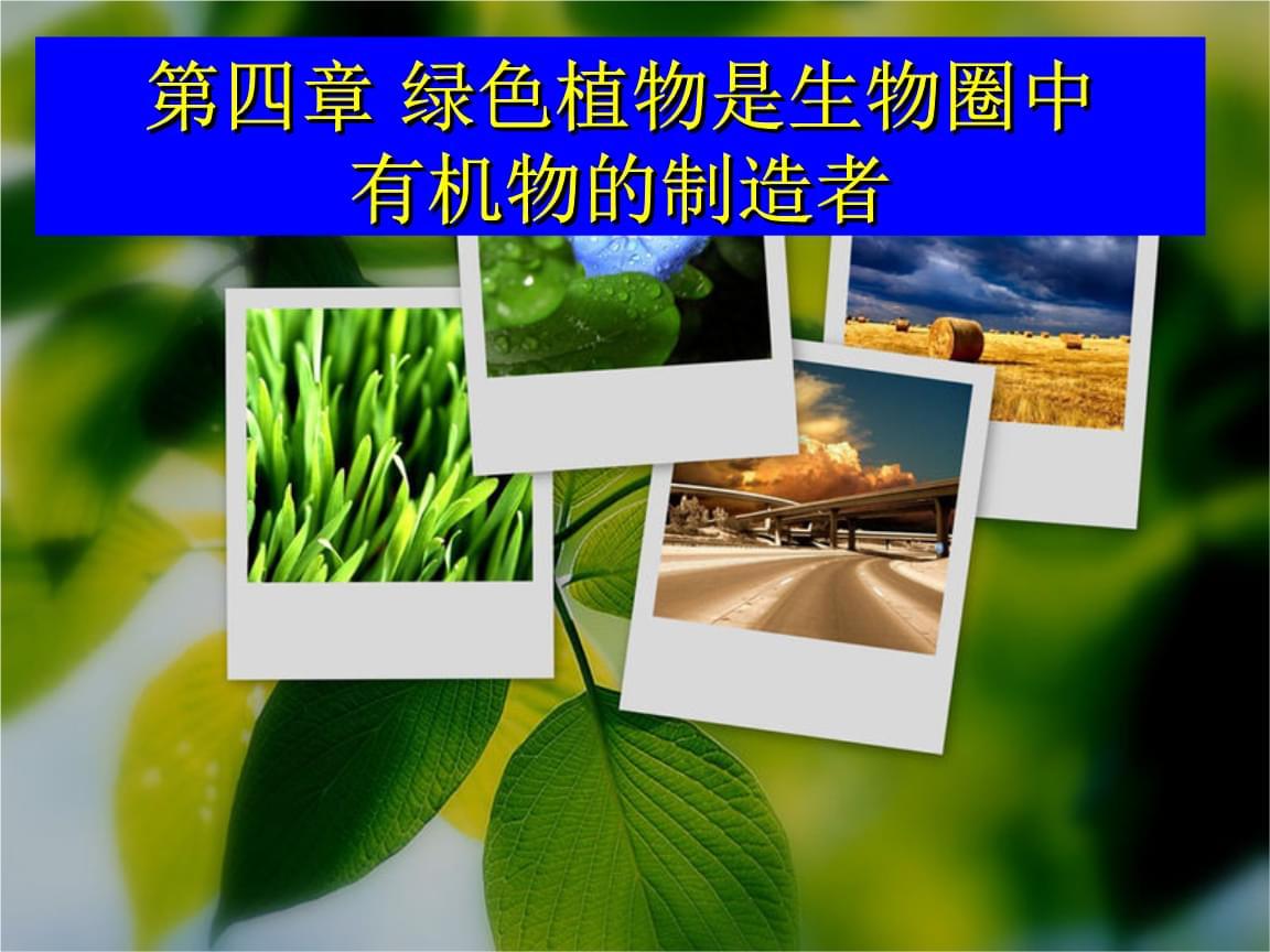 人教版七年级上册生物绿色植物是生物圈中有机物的制造者 (2).ppt