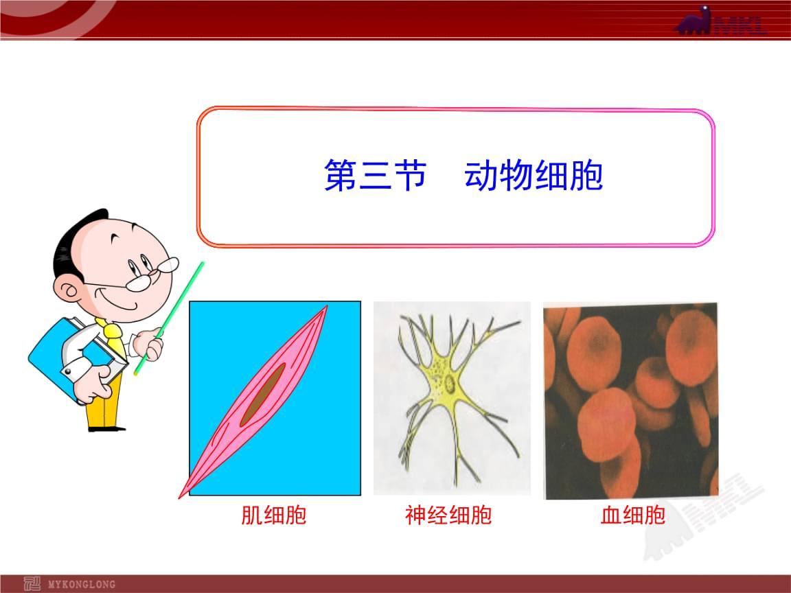 人教版生物七上动物细胞.ppt