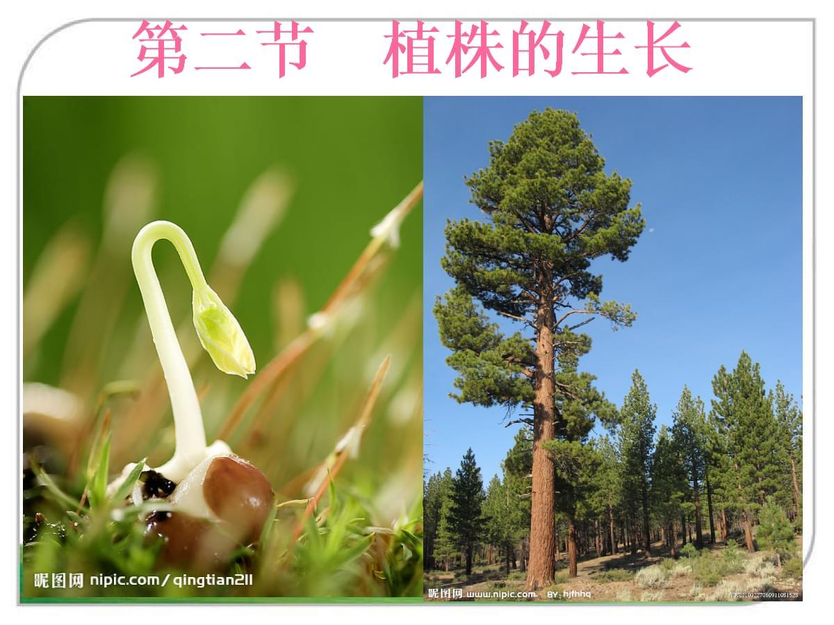 人教版七年级上册生物植株的生长.ppt