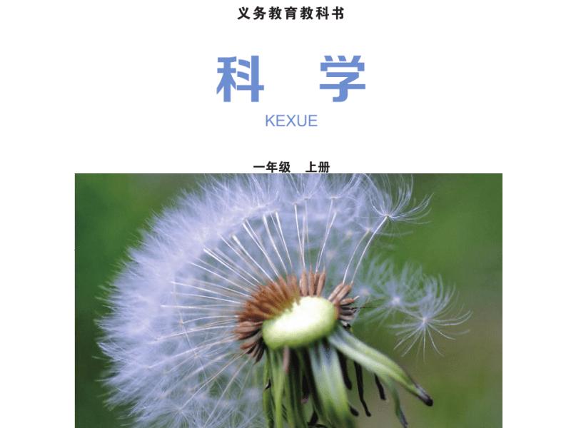 杭州陈荣林:《观察一棵植物》.pdf