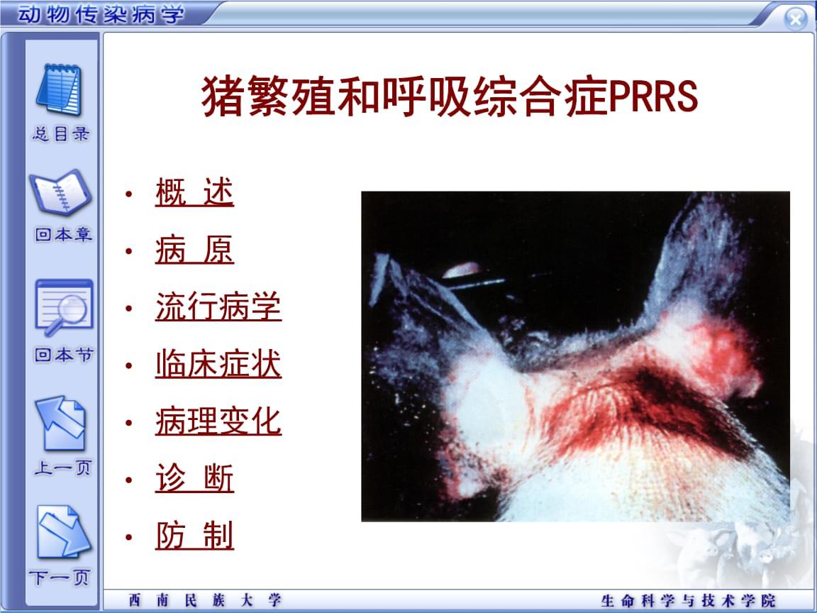 02 猪繁殖和呼吸综合症PRRS.ppt