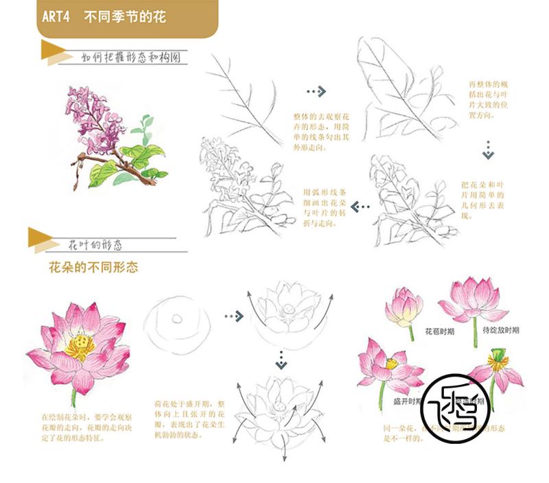 水彩花卉—90套教程 不同季节的花.pdf