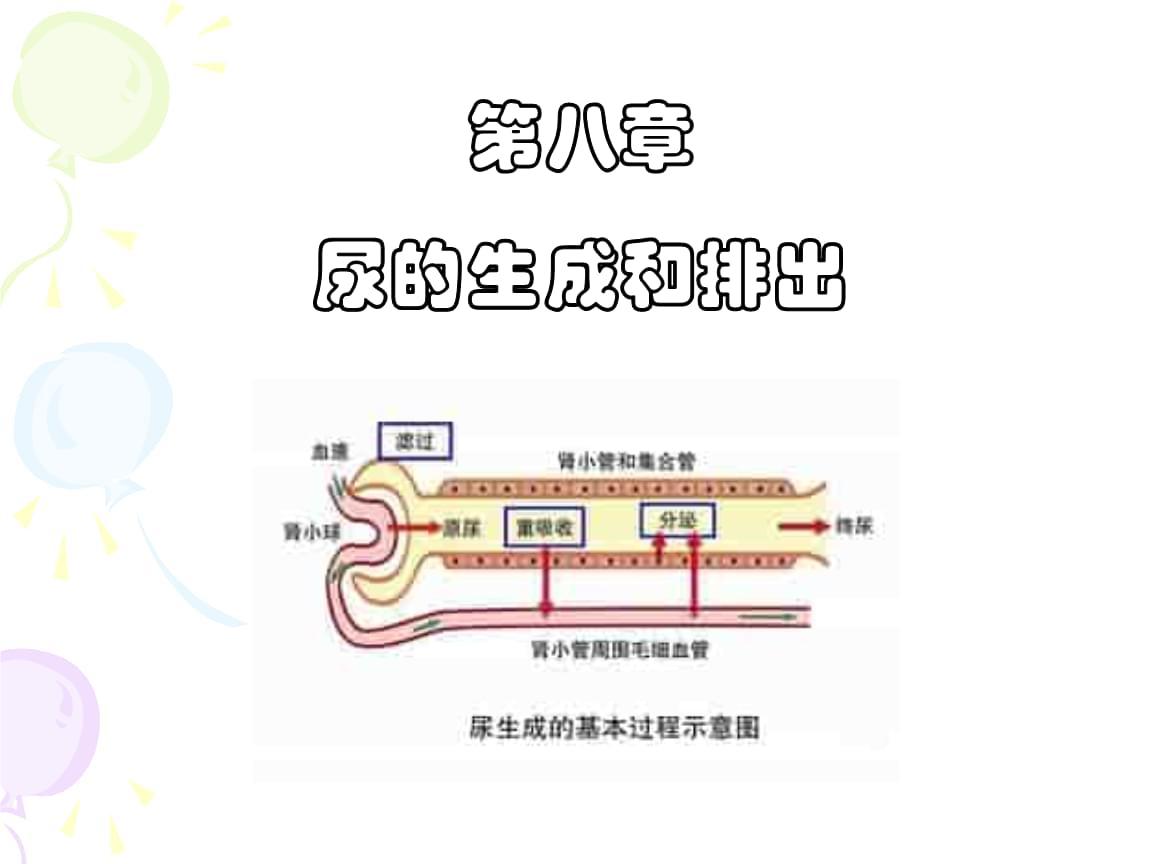 泌尿 尿的生成与排出.pptx