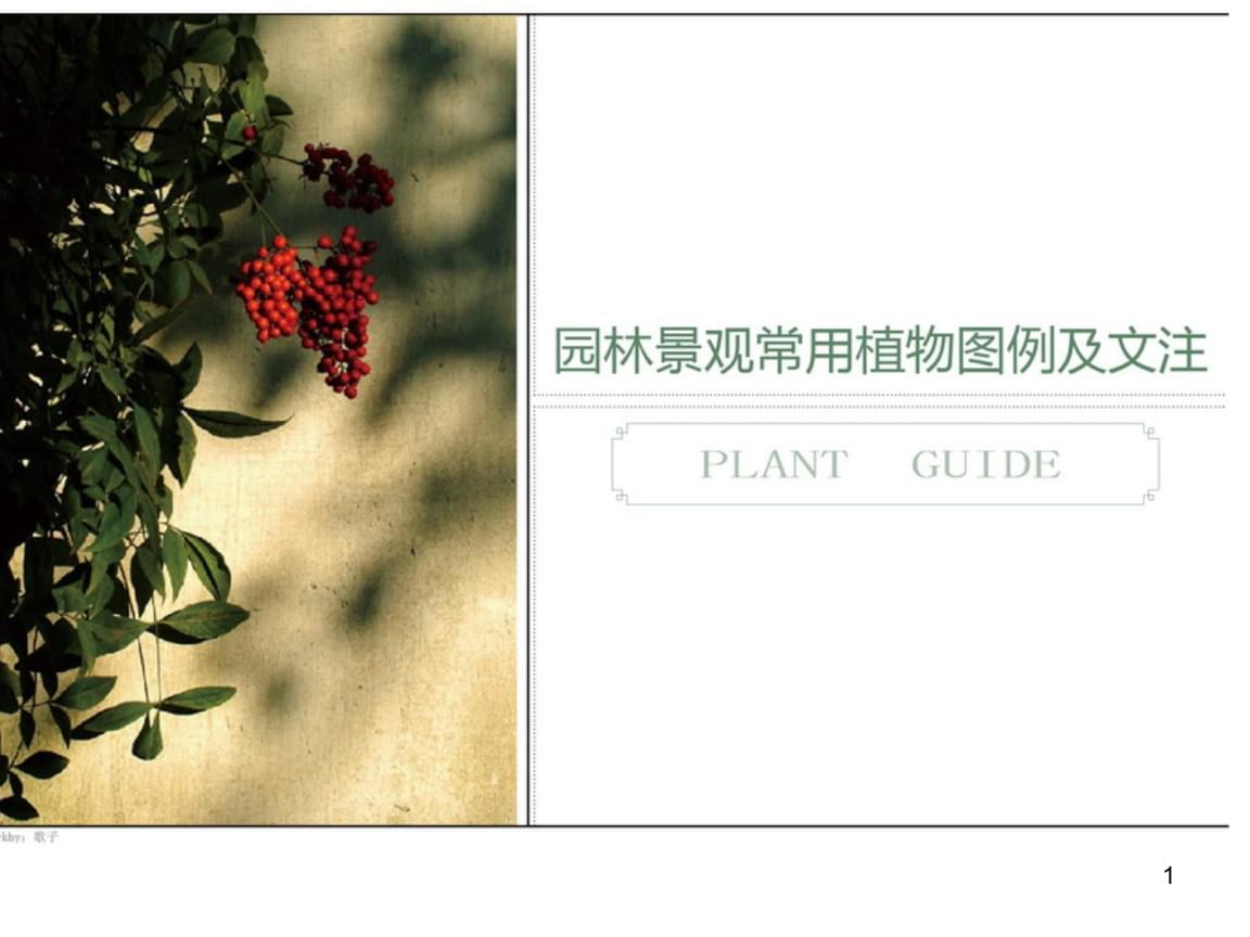 园林景观常用植物图例以及文注.ppt
