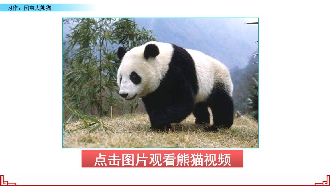 开头:点明大熊猫是国宝 可爱的外形:身体胖嘟嘟,四肢,尾巴,毛色中间
