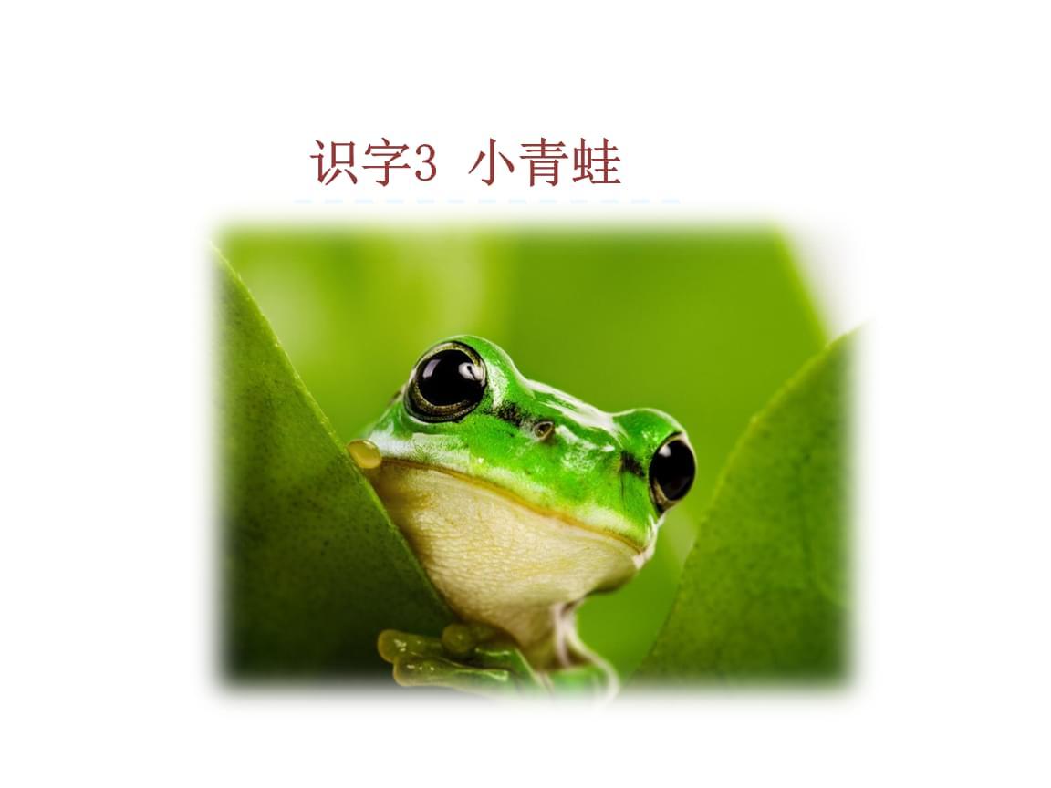 最新人教部编版小学一年级下册语文(课堂教学课件)识字3 小青蛙.ppt