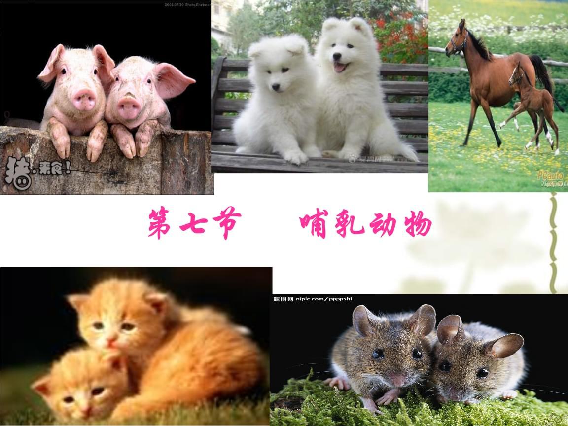 第一章第七节_哺乳动物.ppt