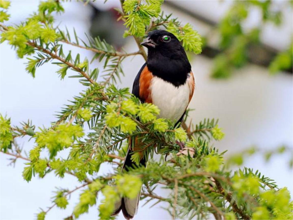 伦理素材机灵小鸟模片免费一组机敏可爱小鸟图照自动体味即播放与日本背景中文版电影在线图片