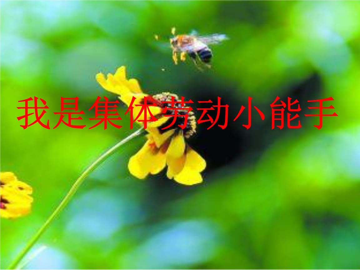 小学综合实践活动《会服务活动  2.争当集体劳动小能手》赛课课件_7.pptx
