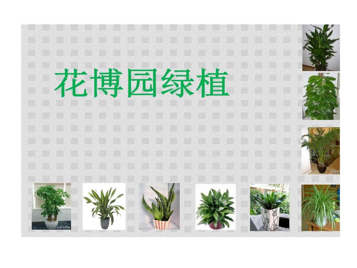 花卉博览园20种绿植总结.ppt