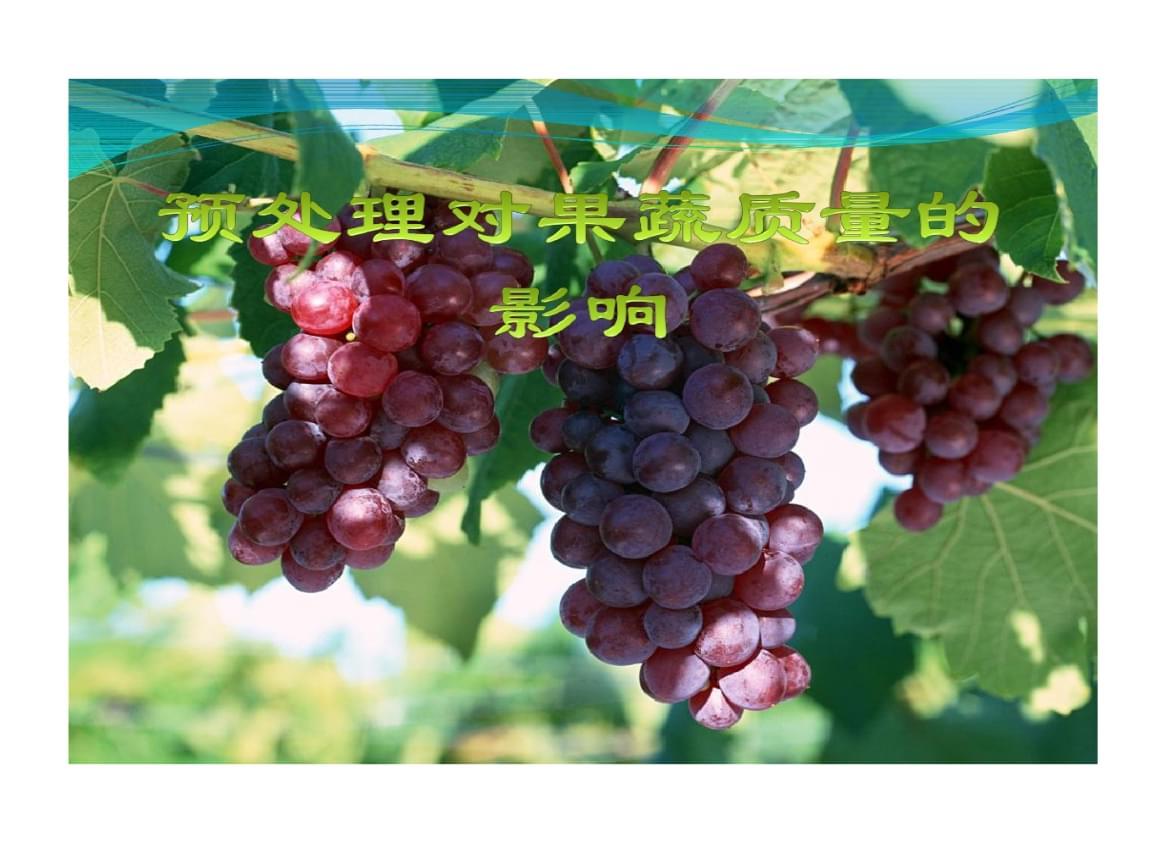 预处理对果蔬质量影响.ppt