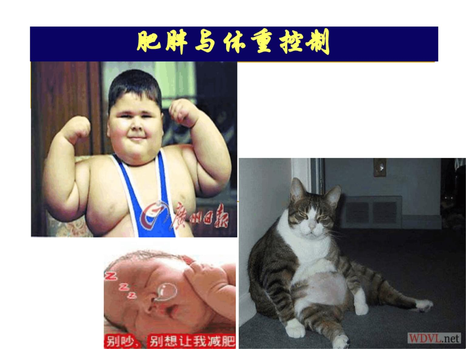 第十八章肥胖与体重控制课件.ppt