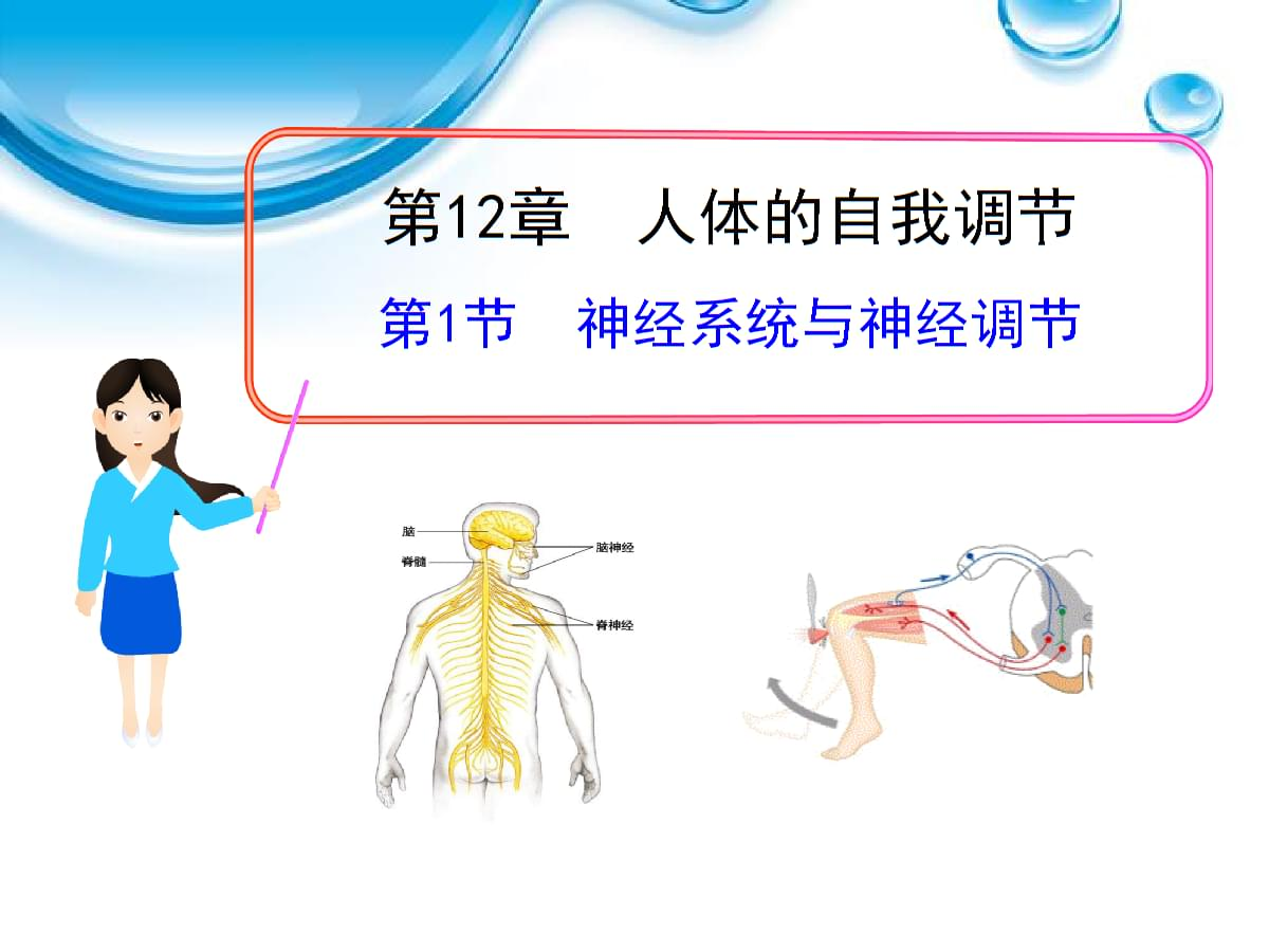 北师大版七下第《神经系统与神经调》.ppt