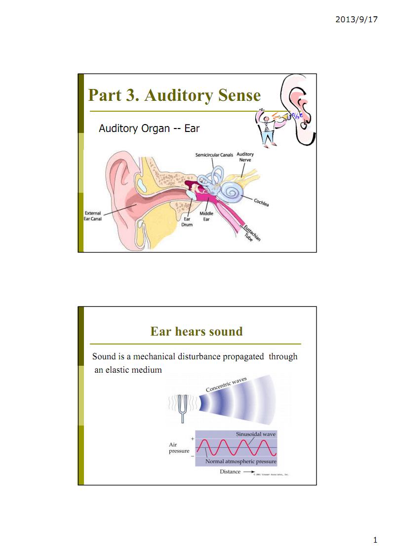 基础医学各论III课件:2_感觉器官B.pdf