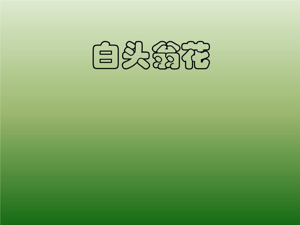 白头翁花幻灯片.ppt