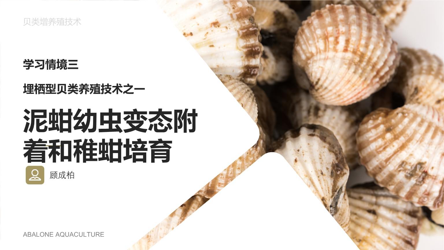 贝类增养殖技术 蚶的养殖技术 8泥蚶的稚蚶培养.pptx
