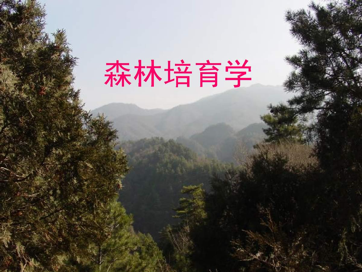 森林培育学课件.pptx