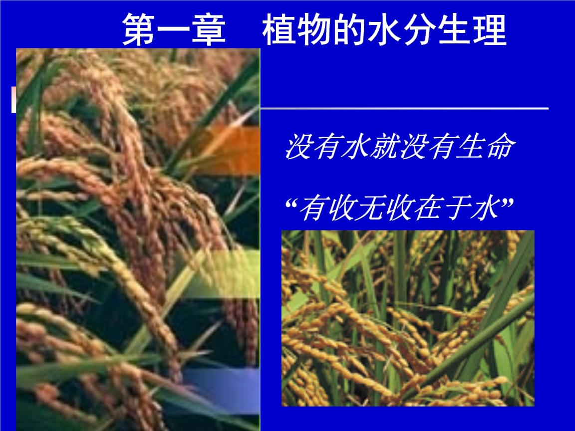 植物生理学:第一章  植物的水分生理.ppt