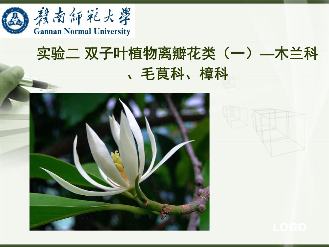 植物学(下)实验二 双子叶植物离瓣花类(一)—木兰科、毛茛科、樟科.ppt