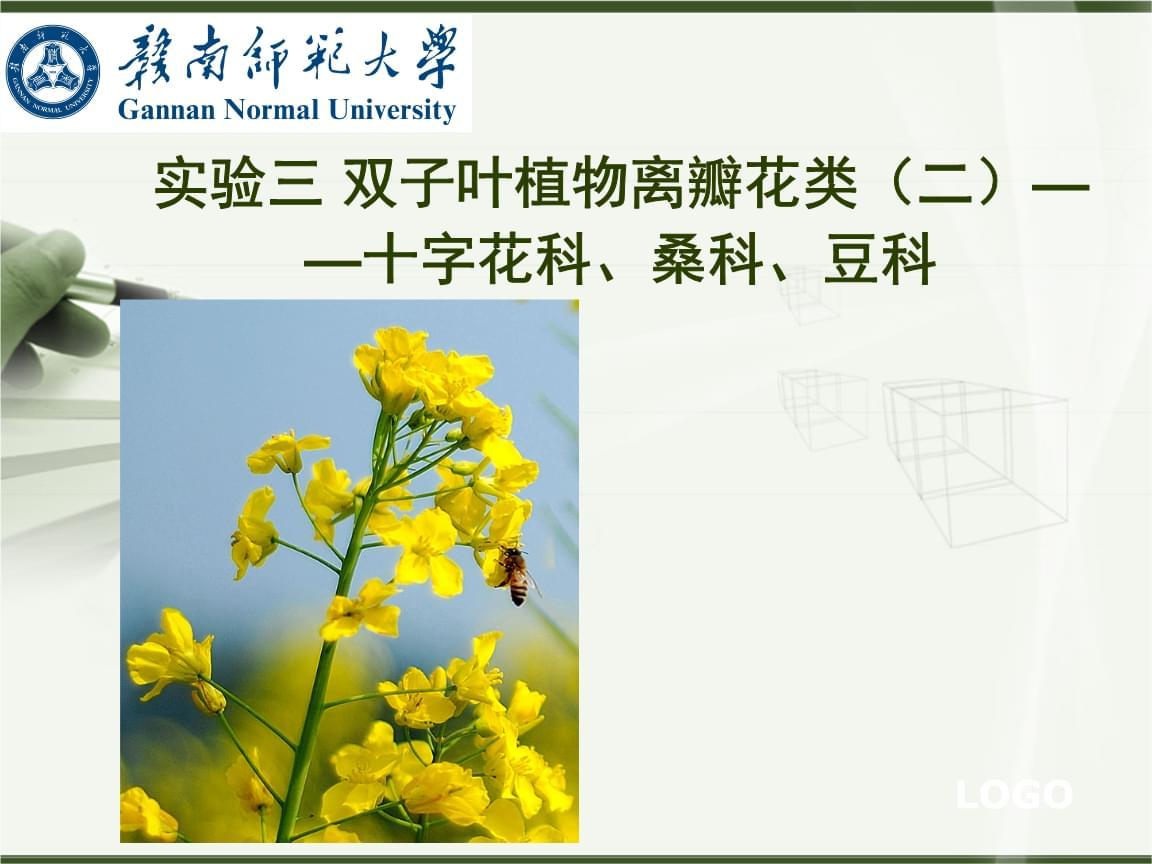 植物学(下)实验三 双子叶植物离瓣花类(二)——十字花科、桑科、豆科.ppt