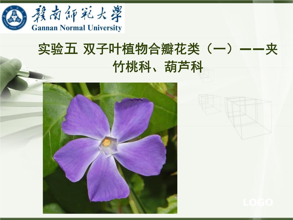 植物学(下)实验五 双子叶植物合瓣花类(一)——夹竹桃科、葫芦科.ppt