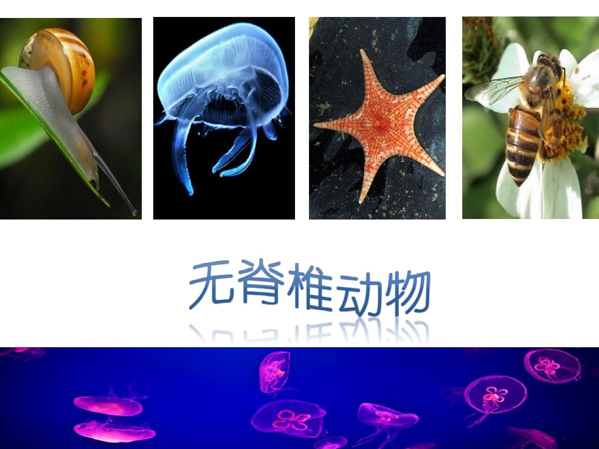 浙教版七年级科学上册2.4《常见的动物(无脊椎动物)》实用授课课件.ppt